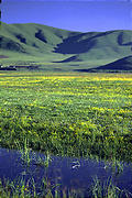 早朝の湿原@紅原